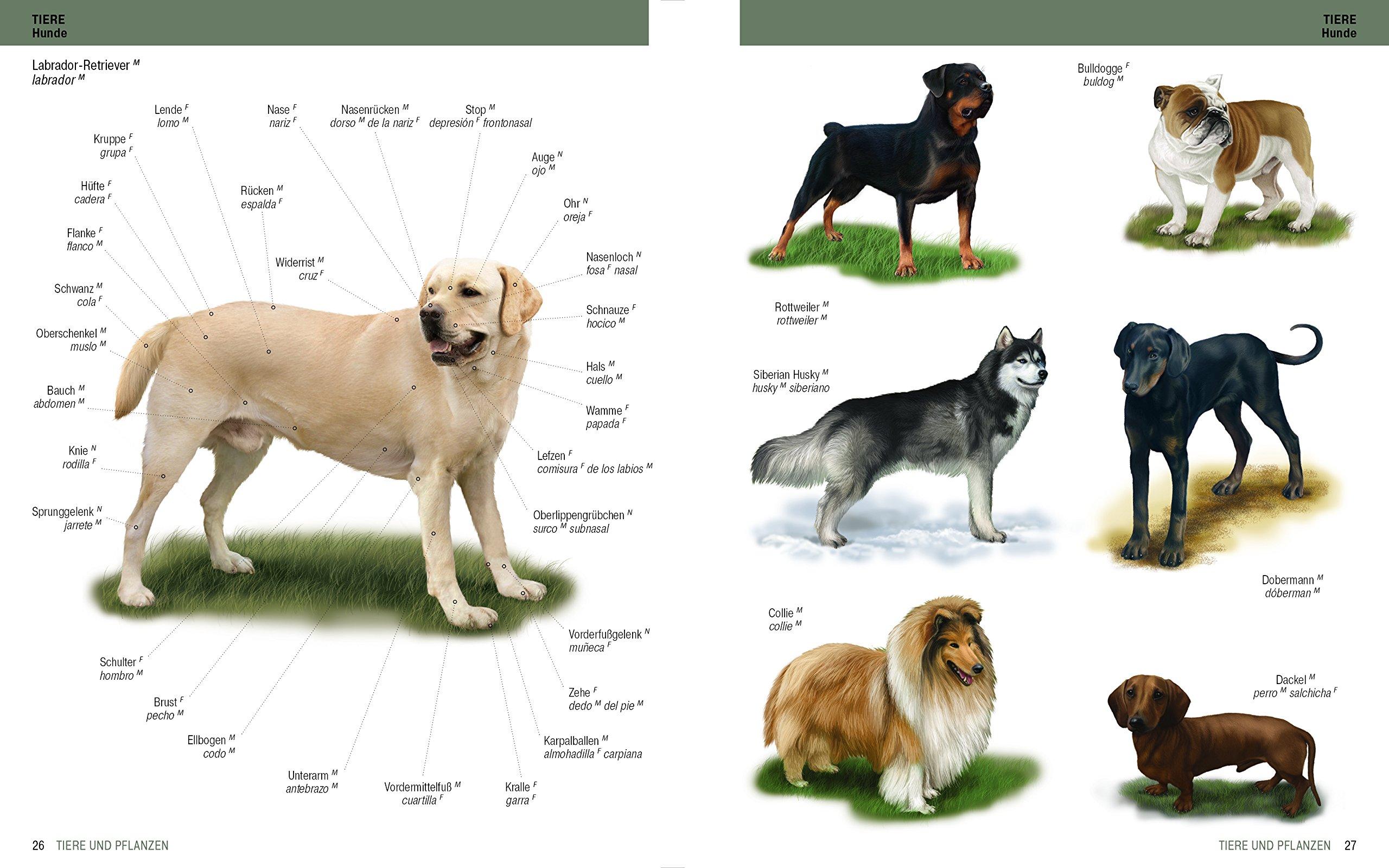Das große Bildwörterbuch Spanisch-Deutsch
