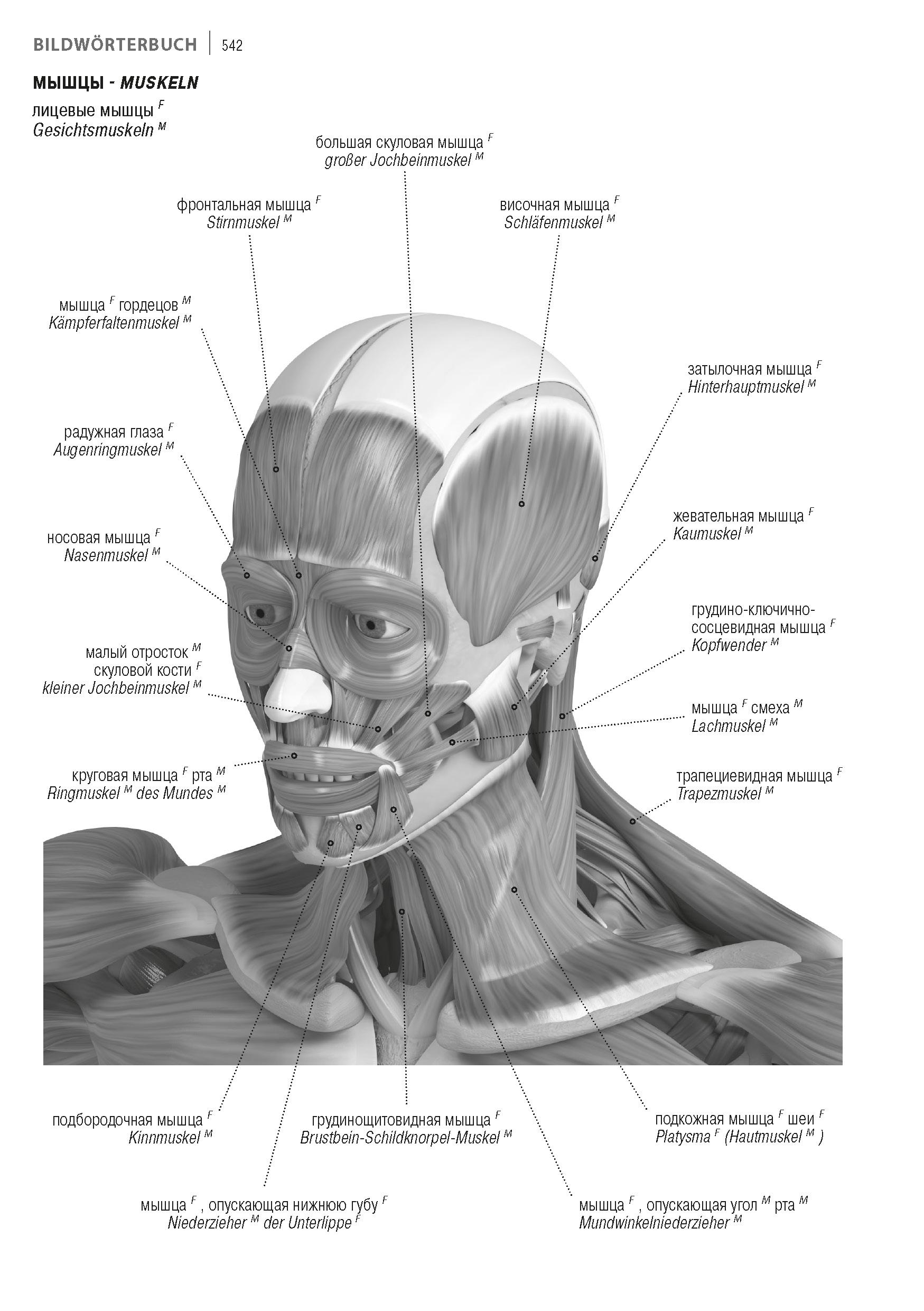 Ziemlich Anatomie Des Mundes Fotos - Anatomie Ideen - finotti.info
